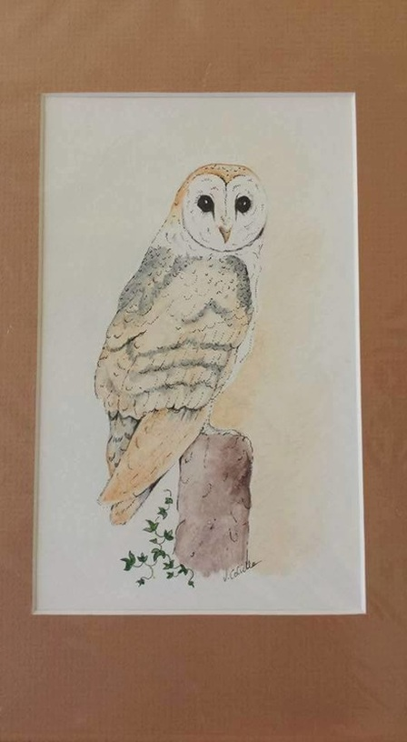 watercolour barn owl painting